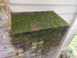 Moss growing on chimney brick and mortar work.